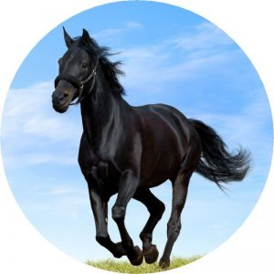 Black Horse Print Tire Cover