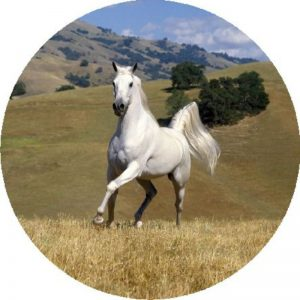 Horse Print #5 Tire Cover